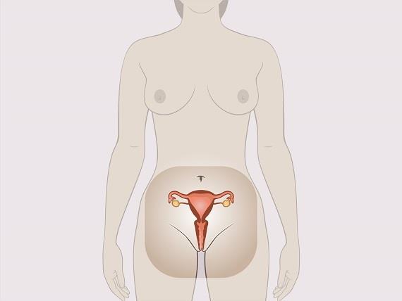 Penis in gebärmutter
