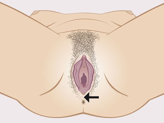 Woman's visible sexual organs with indication of the perineum