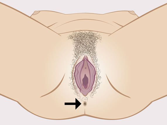 Woman's visible sexual organs with indication of the anus